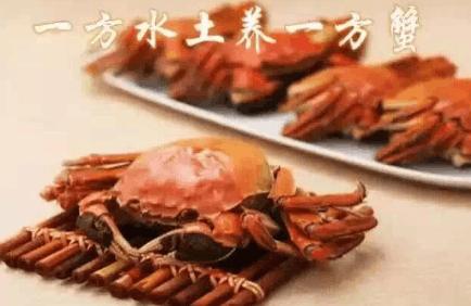 孟亮河蟹以高品质打造盘锦河蟹品牌